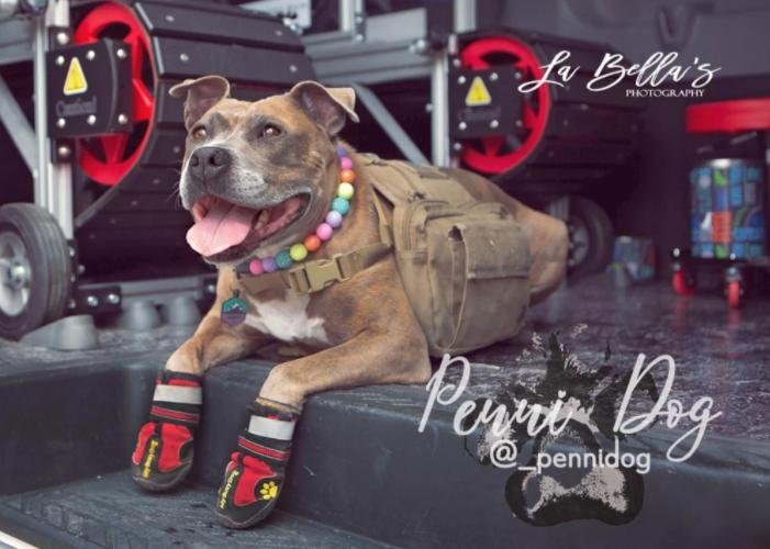 penni dog - Las Vegas only mobile gym that walks your dog