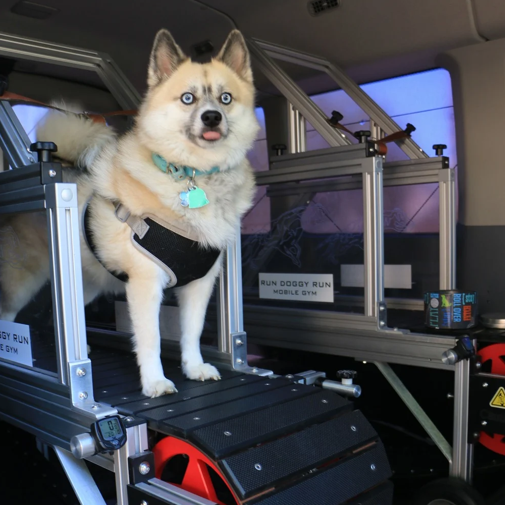 Las Vegas only mobile gym that walks your dog