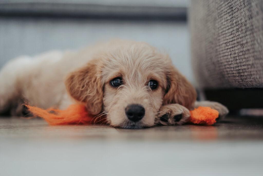 sad puppy dog laying on the fall