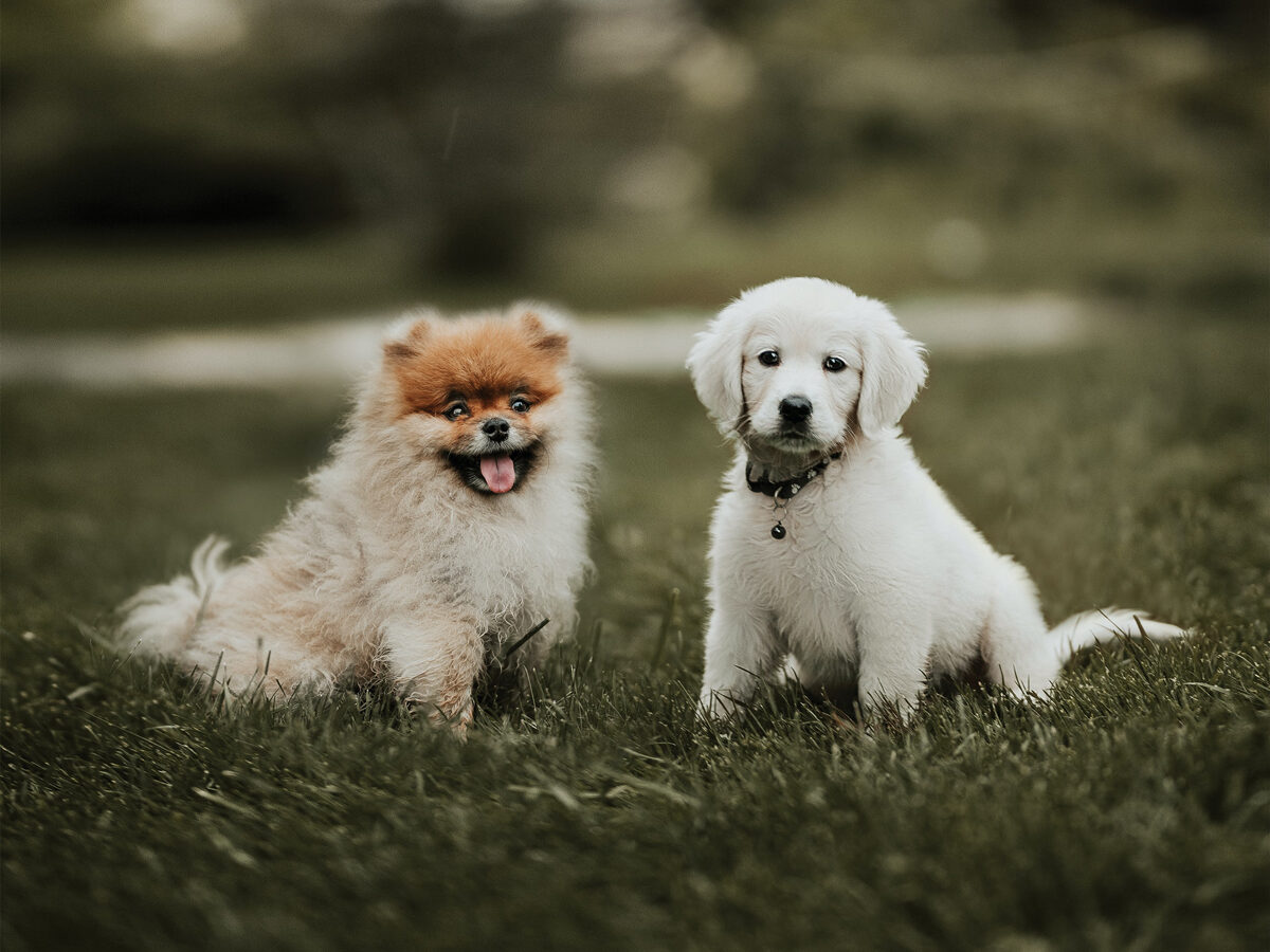 Two puppies posing for a picture at the park
